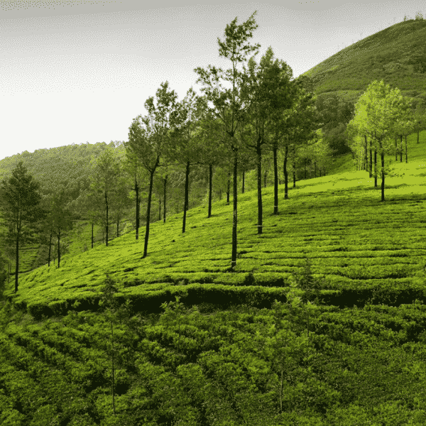 December – The best time for a trip to Kerala