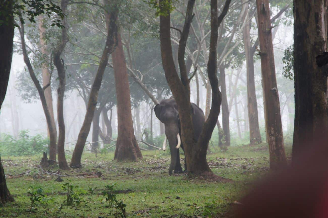Wayanad Wildlife Sanctuary: for those who love wild nature