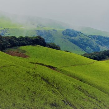 5 Things to do in Munnar on your Honeymoon