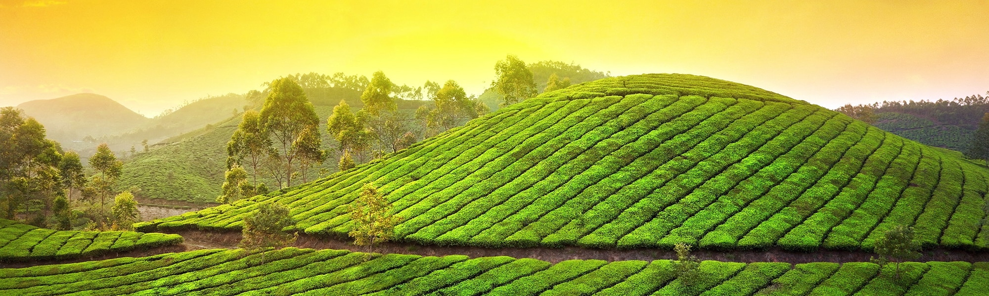 Munnar-The misty mountains