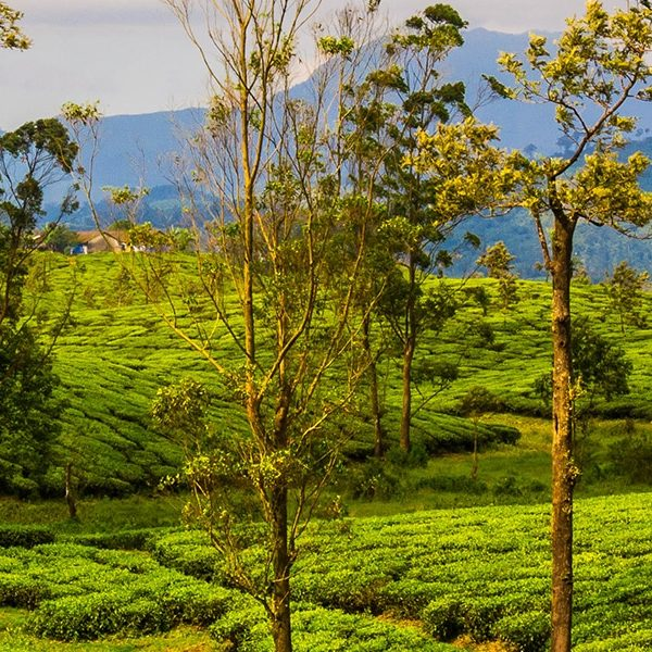 5 reasons why you should spend your vacation in Valparai