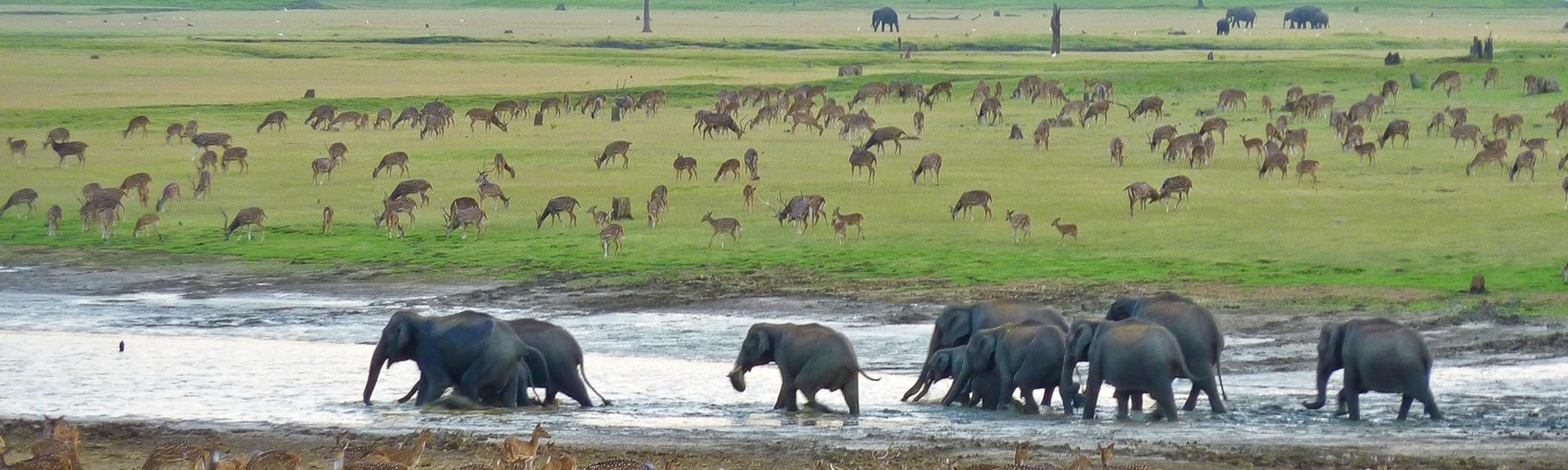 Top Slip – Indira Gandhi Wildlife Sanctuary