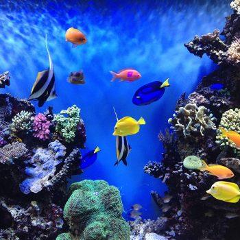 Vizhinjam Marine Aquarium