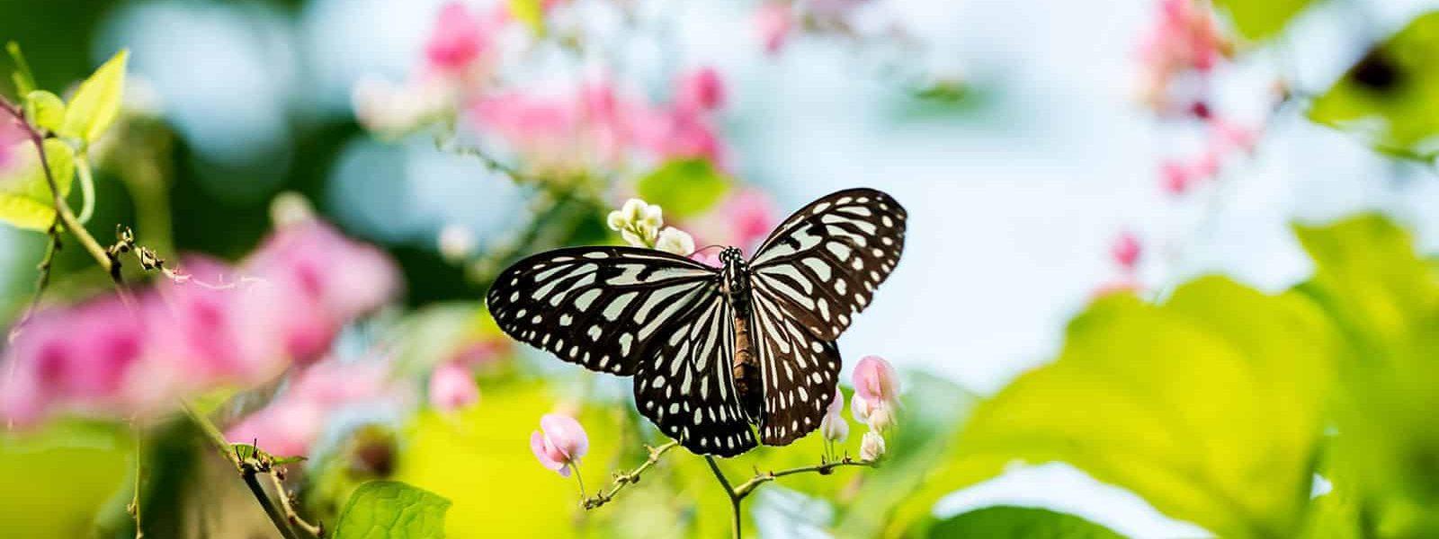 Butterfly park: the unsung beauty of Kuala Lumpur