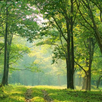 5 tips for your trekking adventure in Parambikulam