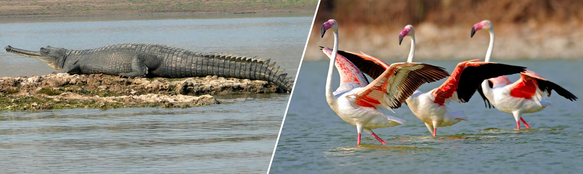 Chambal Wildlife Sanctuary