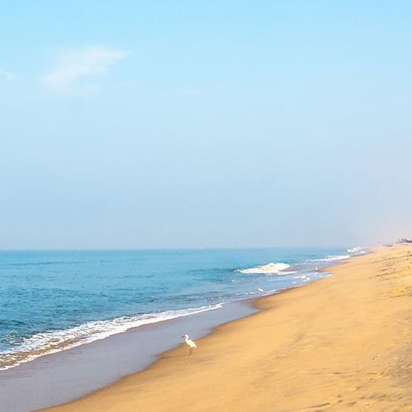 Take a Beach Break in Mararikulam