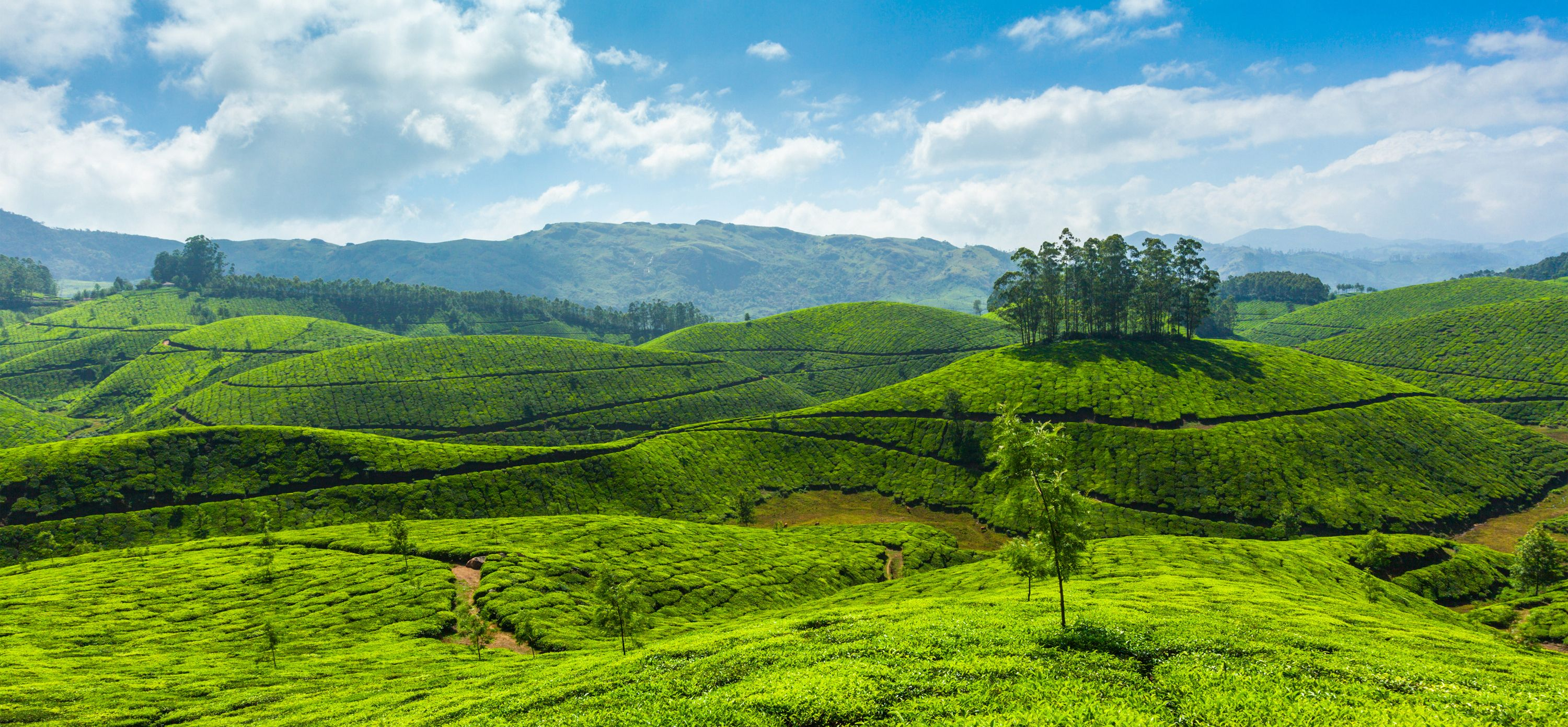 9 Tourist places to visit in Kerala in February