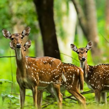 Kerala Hill Stations And Wildlife Tour Packages