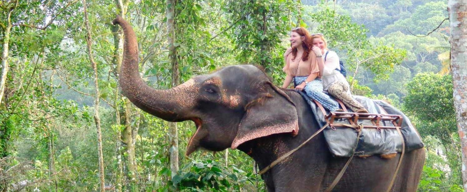 A complete guide for Elephant ride in Kerala