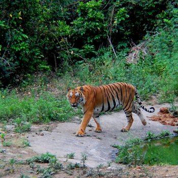 Parambikulam Tiger Reserve