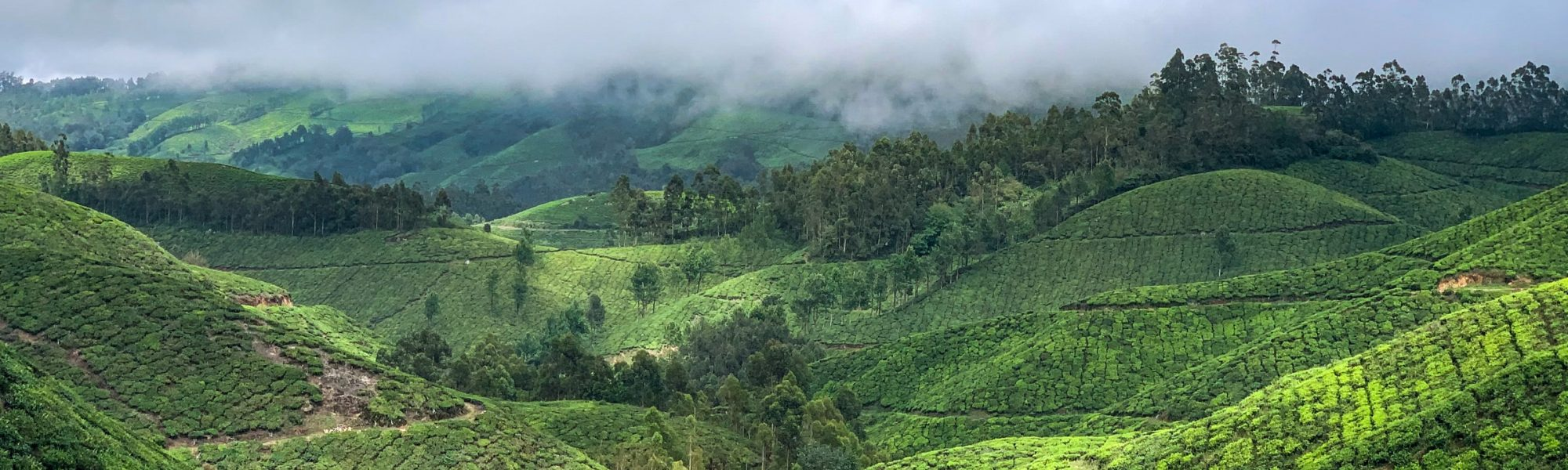 17 Cool Places in Kerala to visit during Summer