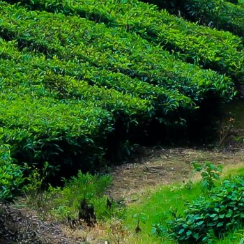 Tourist Places in Kerala To Visit in September
