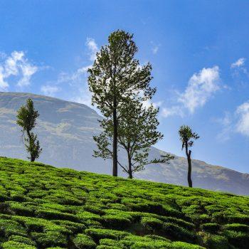 Why You Should Pick Munnar As Your Next Tourist Destination?